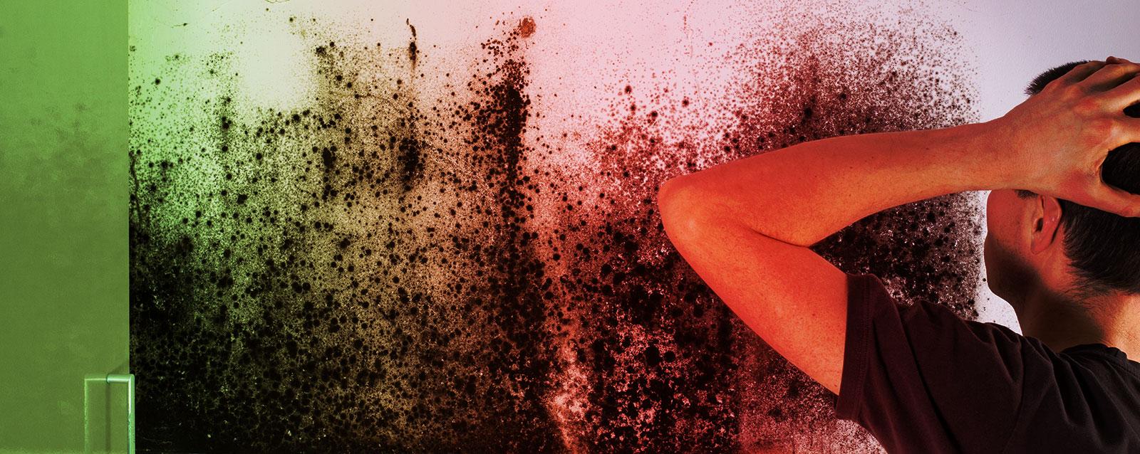 Mold Eradicator | Mold Abatement | Mold Removal | Richton Park, IL